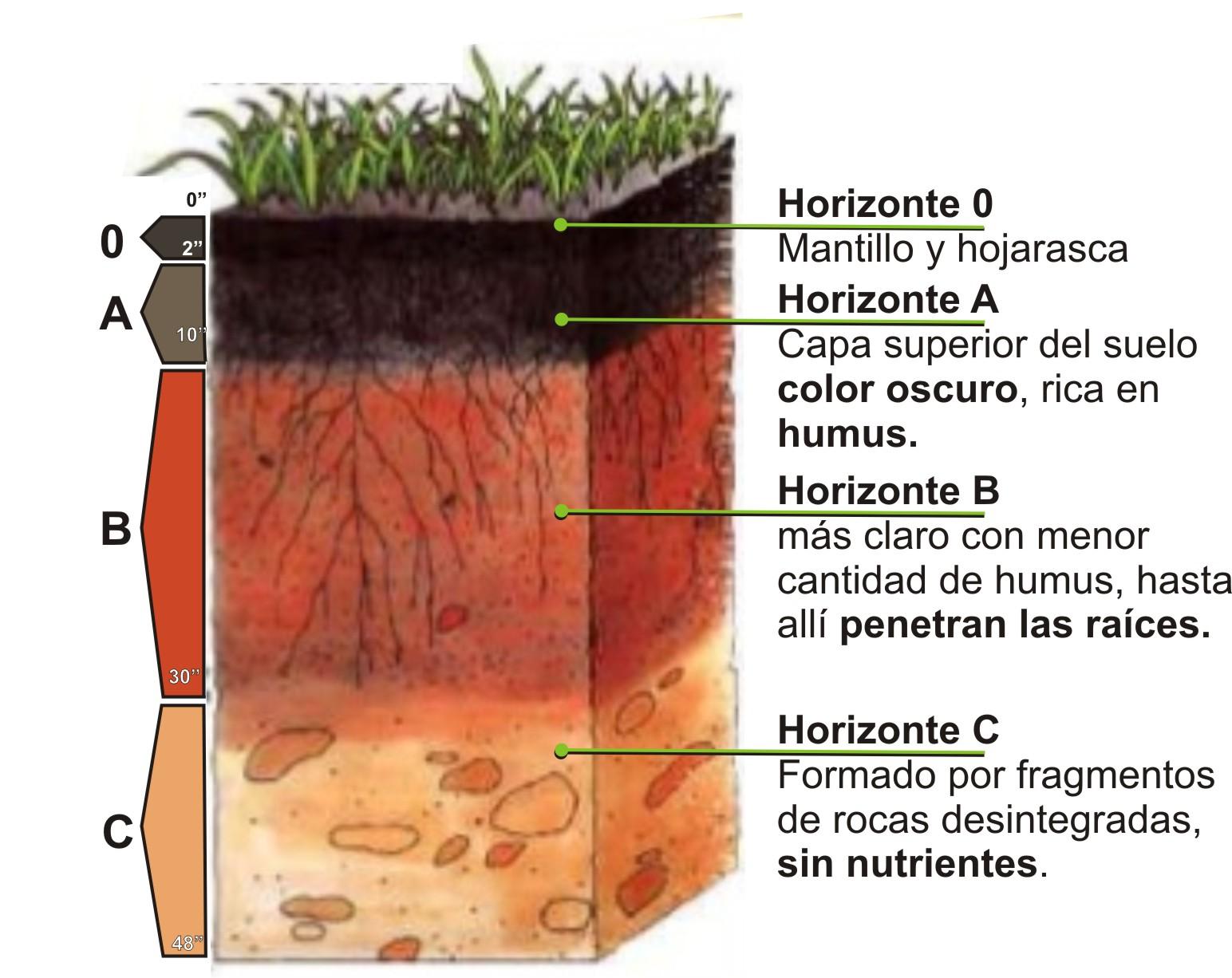 Educaci n ambiental el suelo gobierno de la ciudad de for Que elementos conforman el suelo