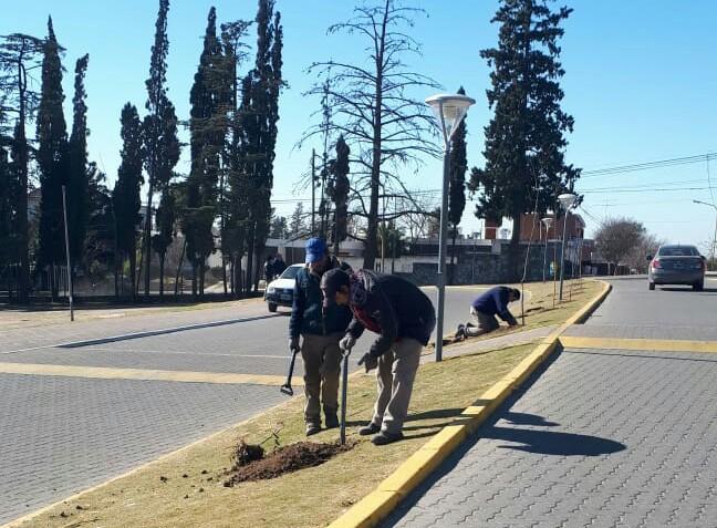 Continúa el programa de forestación y reforestación de nuestra ciudad